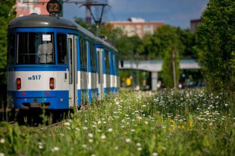 łąka kwietna na torowisku w Krakowie