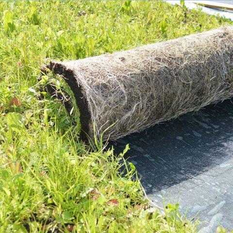 łąka kwietna z rolki