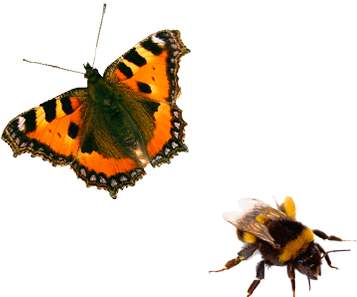 motyl i pszczoła
