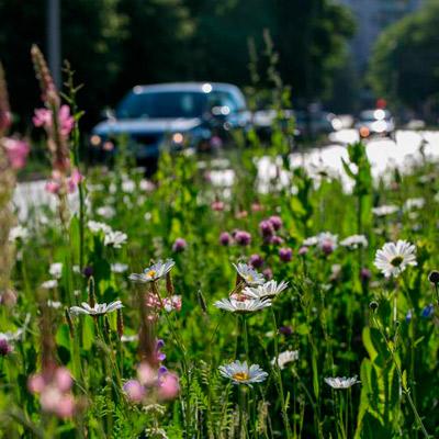 łąki kwietne na pasach zieleni