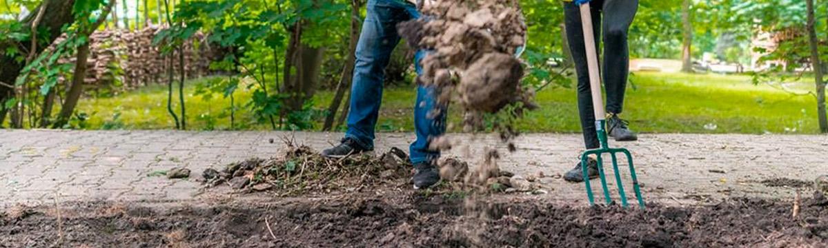 zakładanie łąki kwietnej