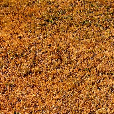 suchy trawnik po koszeniu