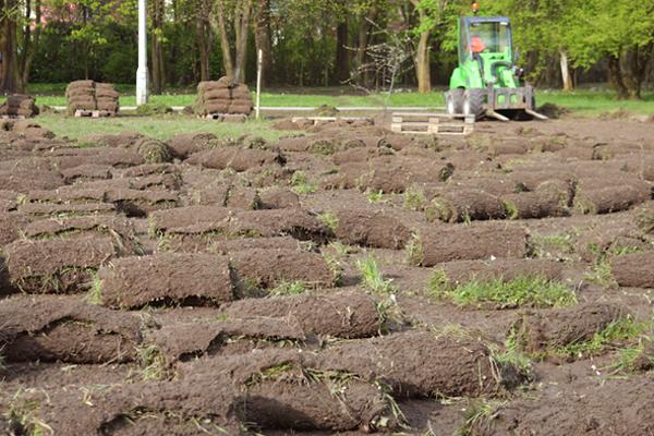wykonywanie łąki kwietnej